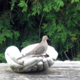 De handen Vogelbad